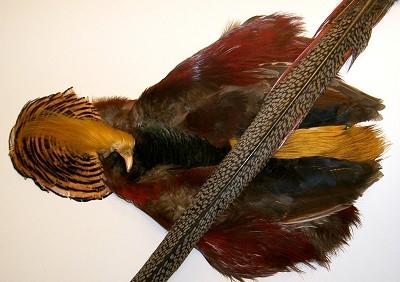 Gullfasan - komplett skinn med hode og hale(212)