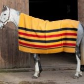 Shires newmarket ullteppe 180x210