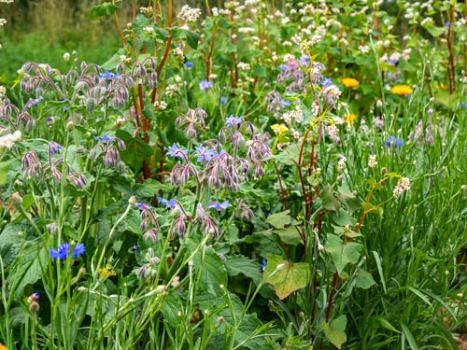 Solhatt Økofrø Blomsterblanding – Insektparadis