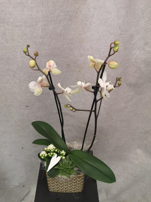 Gruppe hvit med Orkide, miniplanter og pynt