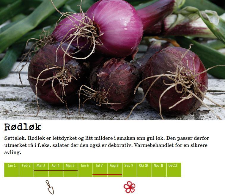 Setteløk, Rød 250gr