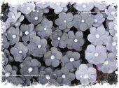 Søte blomster - Søte blomster