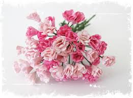 Rufsede blomsterknopper - Rosa