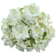 Store Gardenias - Wild Orchids craft- Creme - 6 cm