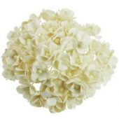50 LIGHT IVORY MULBERRY PAPER SWEETHEART BLOSSOM FLOWERS