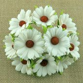 Flowers - Chrysanthemums - Ivory