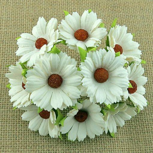 Flowers - Chrysanthemums - Ivory
