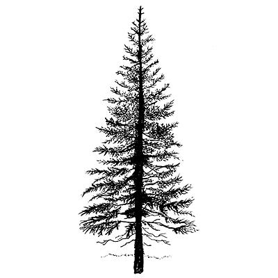 Fir Tree 1 LAV094