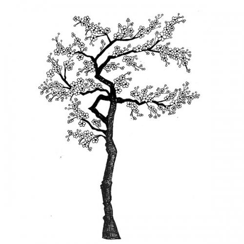 Cherry Blossom Tree - LAV015