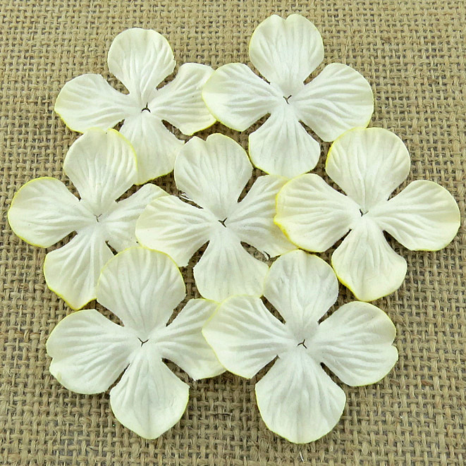 Wild orchid craft - 100 IVORY HYDRANGRA BLOOMS
