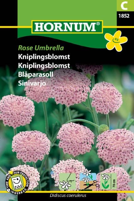 P.FRØ KNIPLINGSBLOMST ROSE (C)