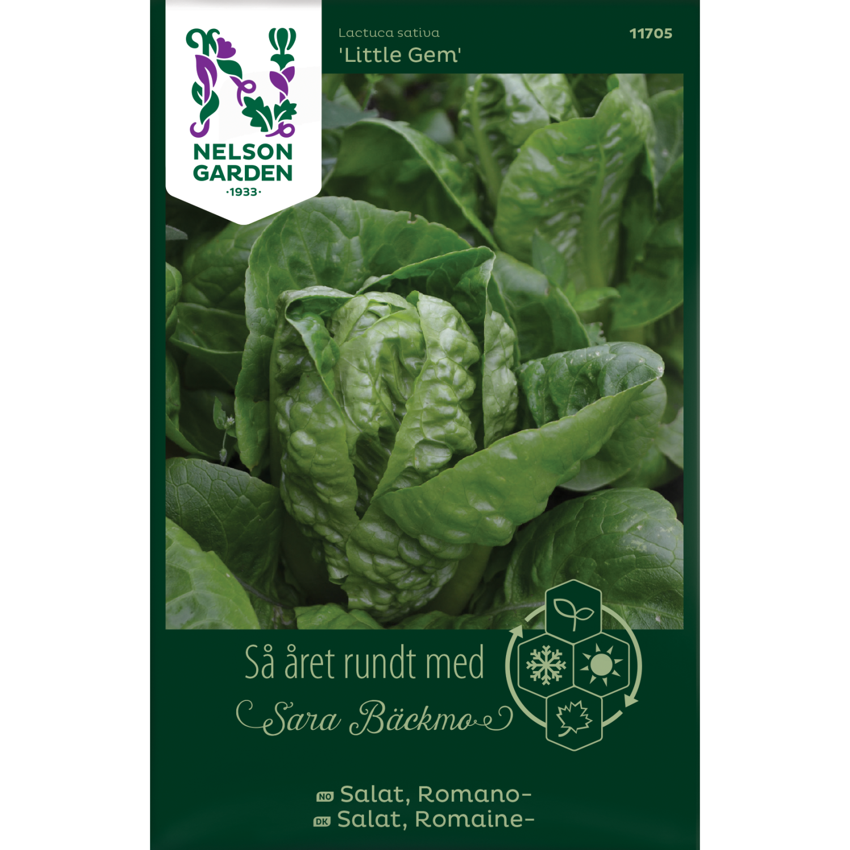 Salat, Romano-, Little Gem
