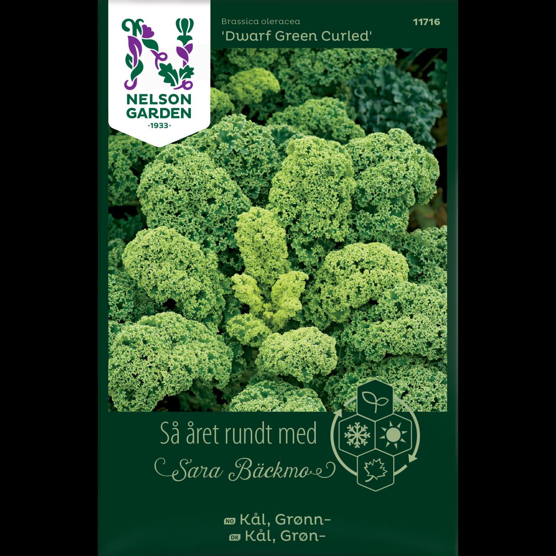 Kål, Grønn-, Dwarf Green Curled