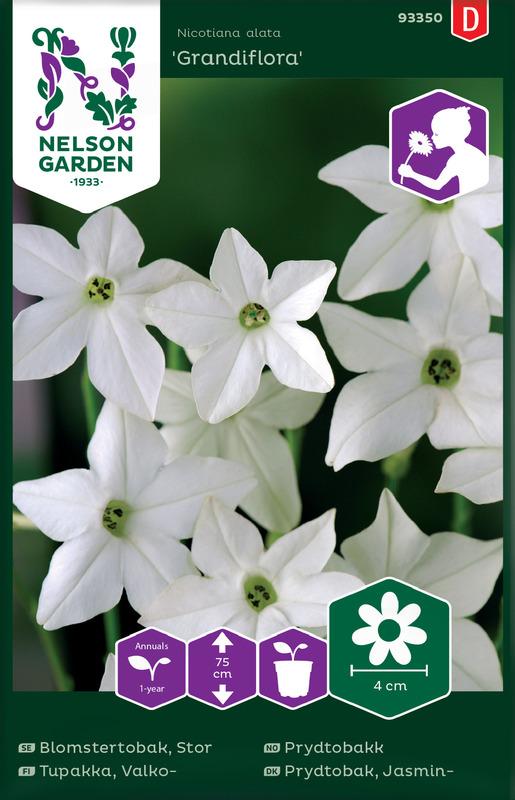 Prydtobakk, Grandiflora, hvit