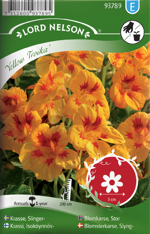 Blomkarse, Stor, Yellow Troika