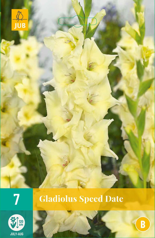 Gladiolus Speed Date