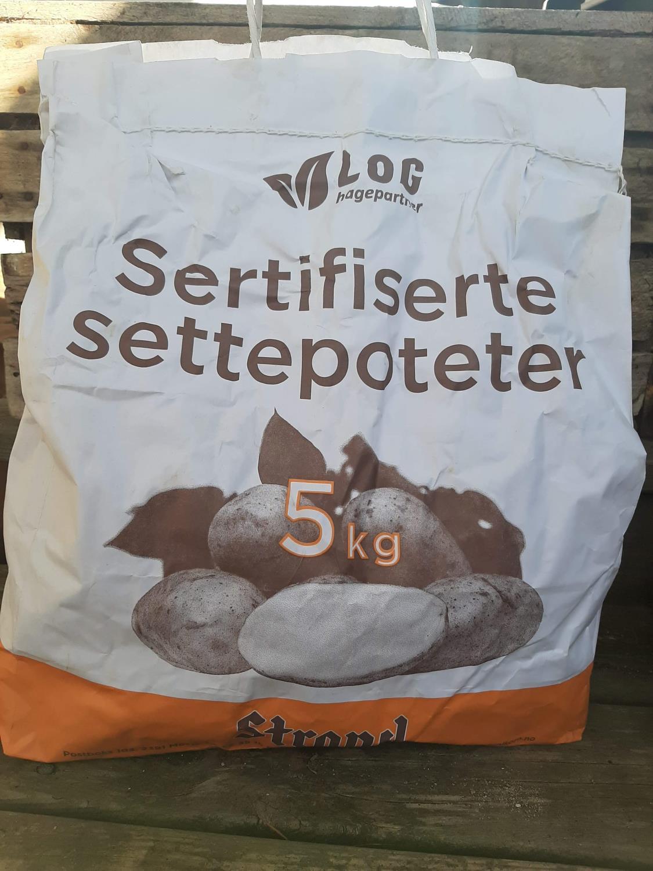 Settepotet Kerrs Pink (sen) 5 kg
