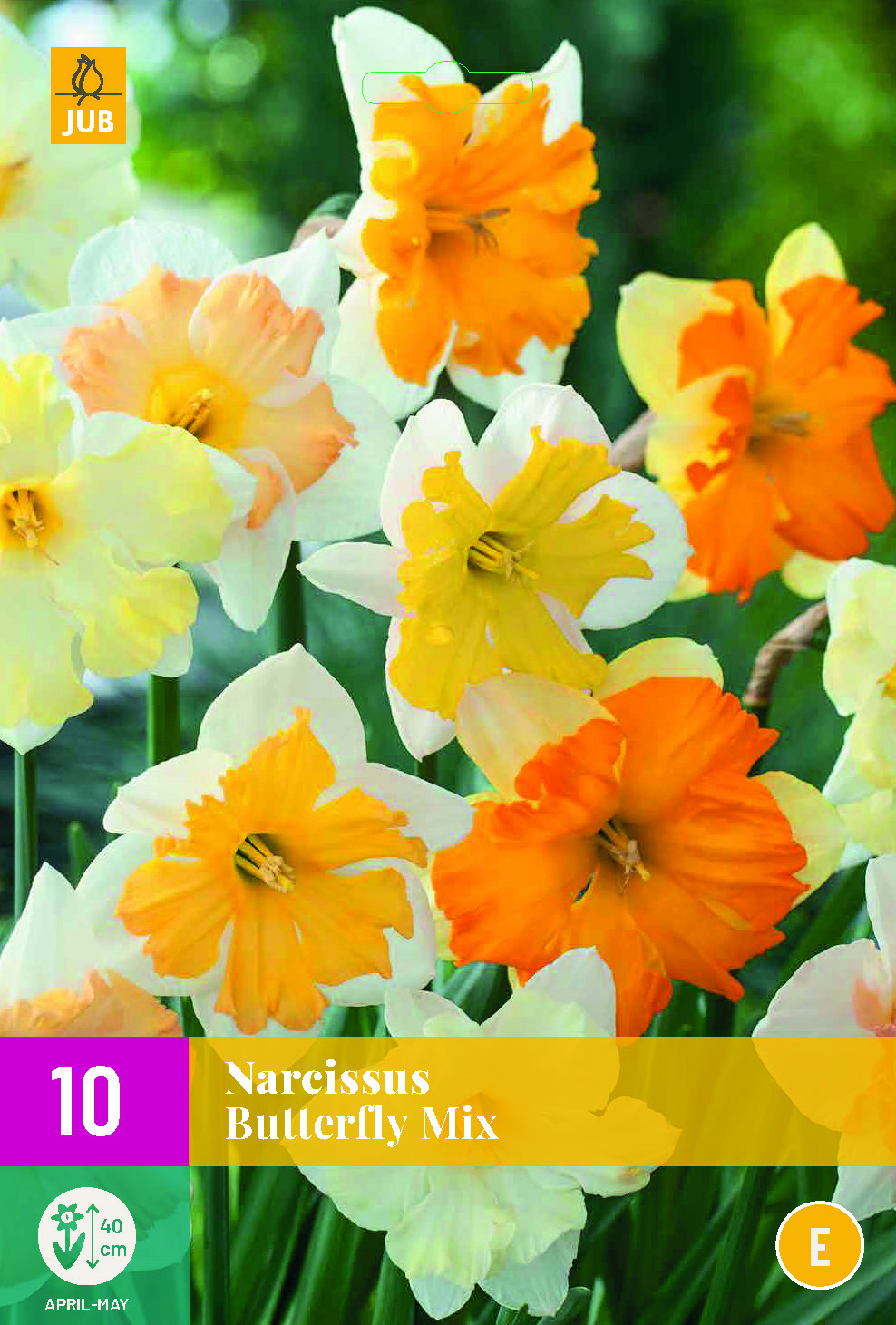 NARCISSI BUTTERFLY MIX 10