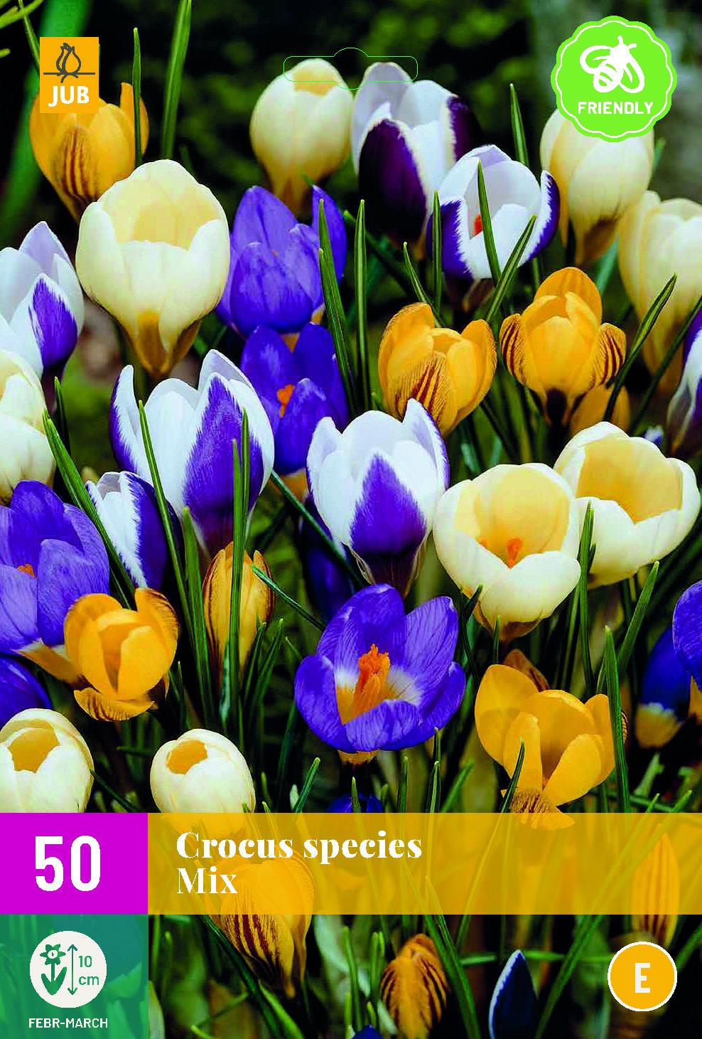 CROCUS SPECIES MIX 50