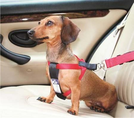 Trine Sikkerhetssele for bil XS