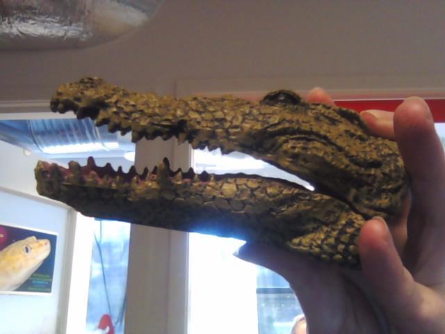 Boyu Krokodillehode
