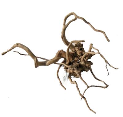Desert root M (30-43cm)