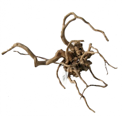 Desert Root XL (60-80cm)