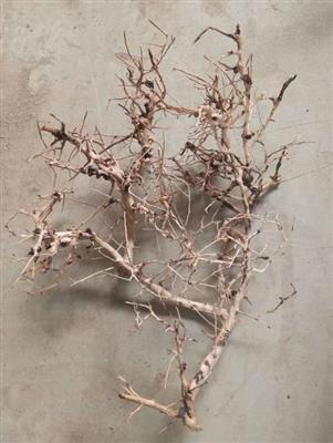Aquascaping root 25-35cm
