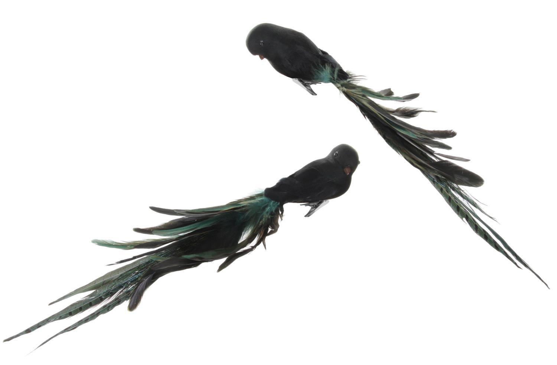 ShiShi Fugl Sort m Sortgrønne fjær