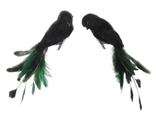 ShiShi Fugl Sort m Sotgrønne fjær