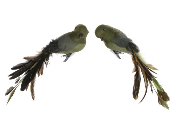 ShiShi Fugl Grønn m Brune fjær