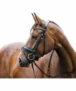 HorseGuard Ergo Hodelag