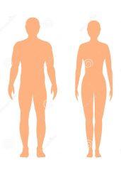 Din høyde 155-170cm