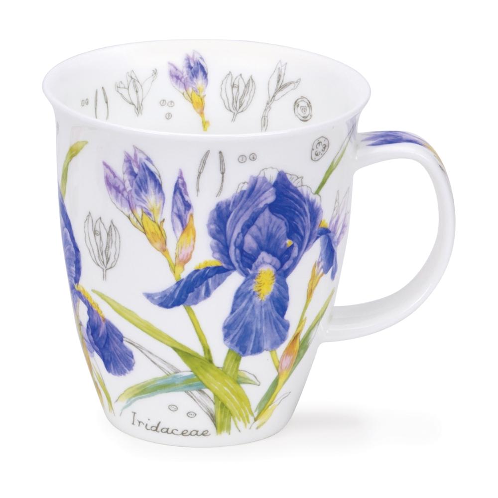 Nevis floral scetch - blue - iris