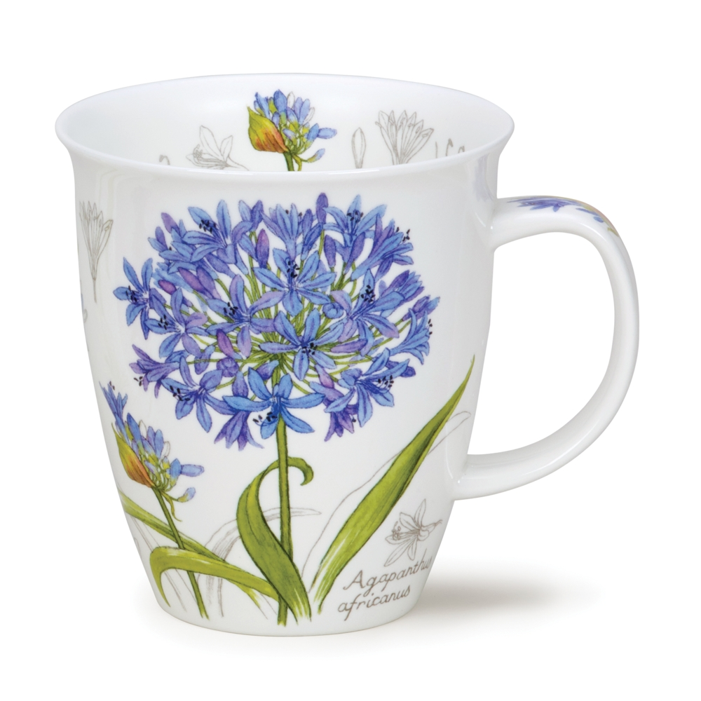 Nevis Botanical scetch - Agapanthus