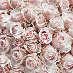 Kaffe servietter pastel roses 25x25