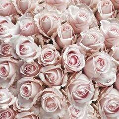 Lunsj servietter pastel rose 33x33