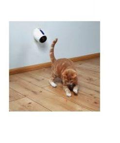 KATTELEKE Bevegende laser pointer