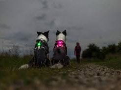 ORBILOC Dog Dual, Rosa