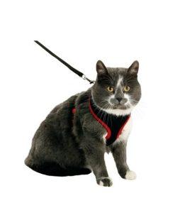 Kattesele Nett m. Koppel Kitten Svart/Rød 10Mmx120Cm