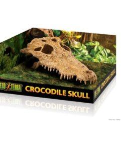 Grotta Krokodil Kranium Exoterra