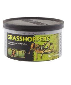 GRASSHOPPERS ExoTerra, Hermetisk, 34g.