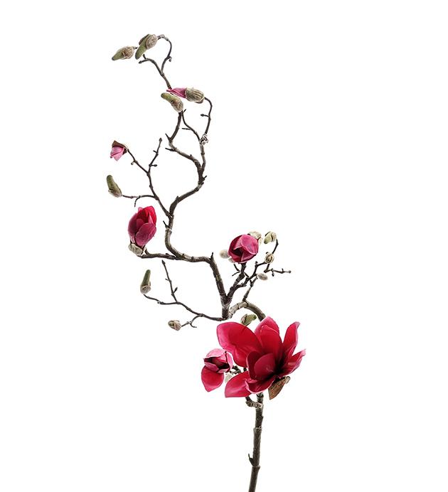 Magnolia 135 cm