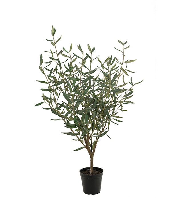 Oliv 100 cm