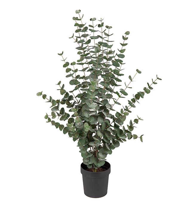 Eucalyptus 110 cm