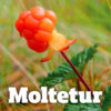 Moltetur