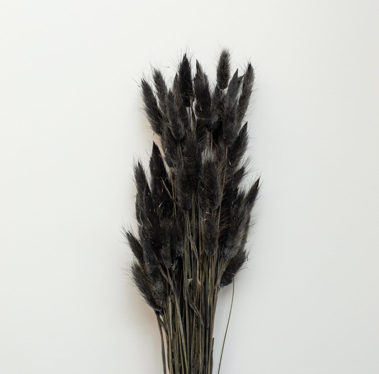 COOEE - Lagurus svart