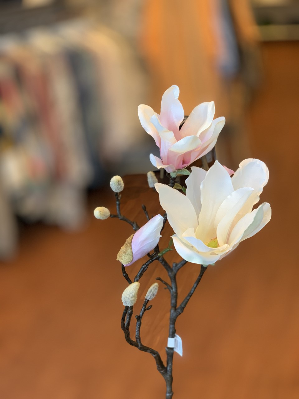 Mr Plant Magnolia snitt
