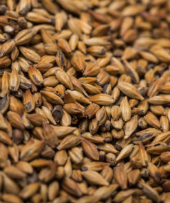 Pale rye malt (rugmalt) 4-10