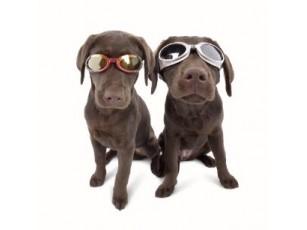 Solbriller doggles ILS large